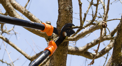 tree pruning in Stamford, CT